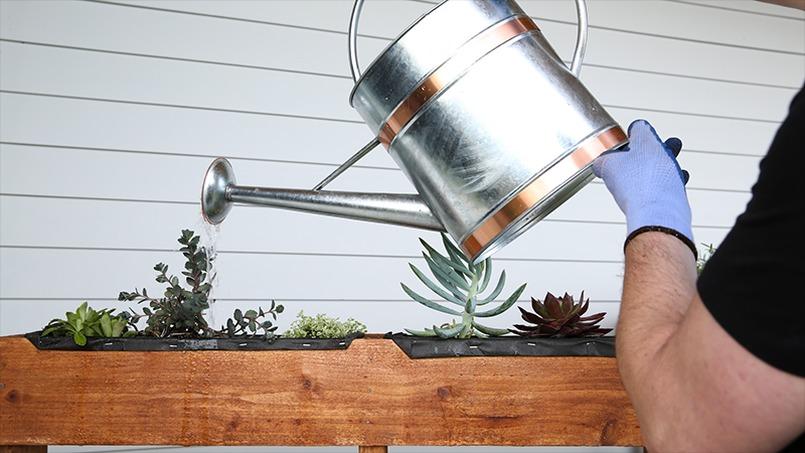 DIY vertical pallet garden