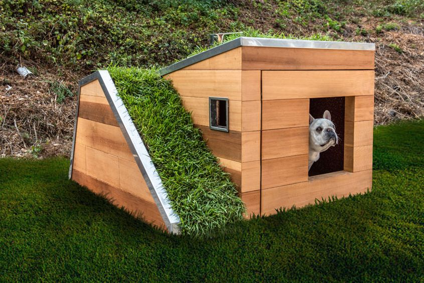 Studio Schicketanz Dog House Features Green Roof, Automated Faucet