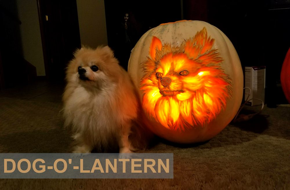 Carve dog-o'-lantern Pumpkin-This-Halloween