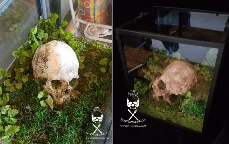 DIY Skull Terrarium by Eat The Dead