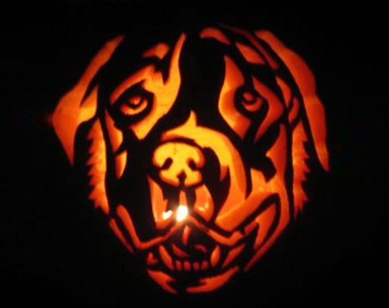 Jack-O'-Lassie - Halloween Decoration Idea