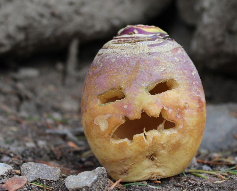 Turnip jack-o'-lantern