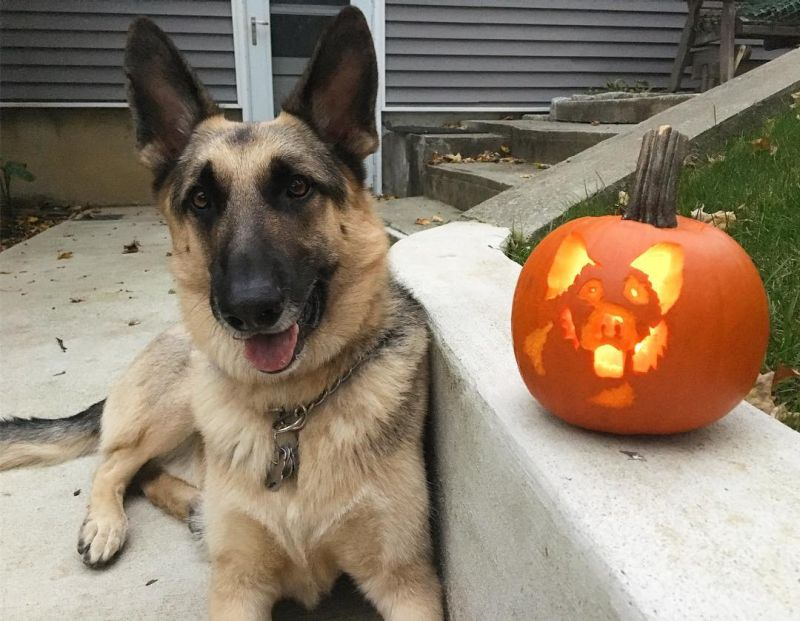 dog o lantern - Dog pumpkin carving ideas