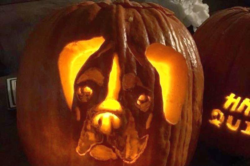 dog o lantern - Dog pumpkin carving ideas for Halloween