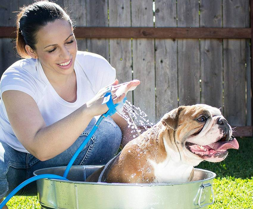 Dog shower and scrubber