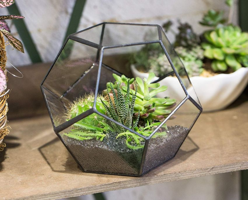 NCYP Tabletop Terrarium - Gifts for her