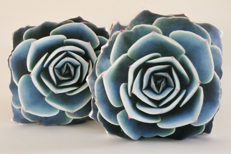 Plantillo succulent pillow