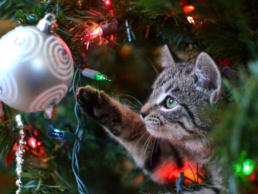 Christmas Tree and Cats