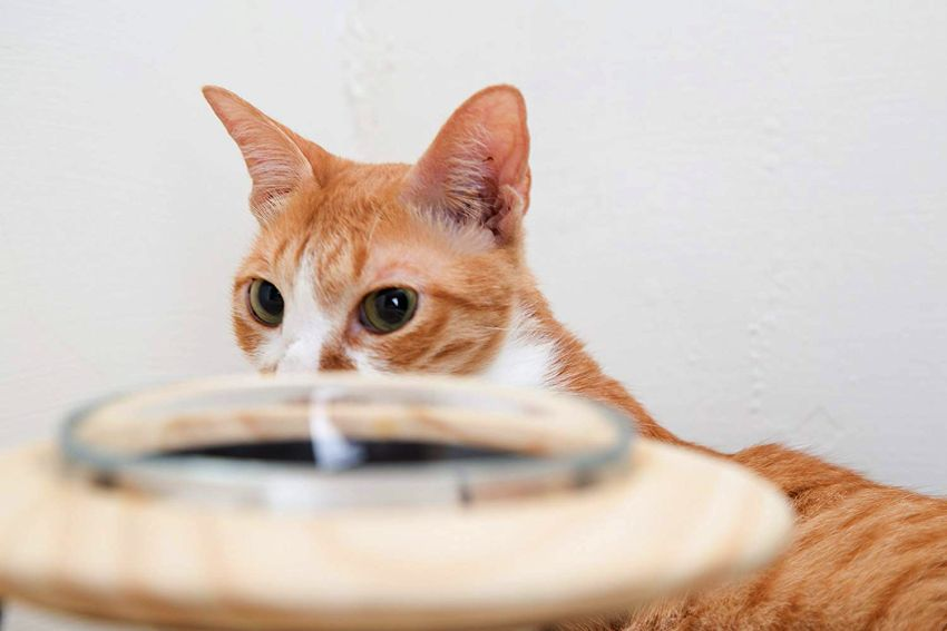 Outerspace pet bowl - buy pet accessories