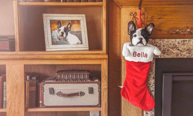 Cuddle Clones Makes Custom Stuffed Animals Looking-Like Your Pet