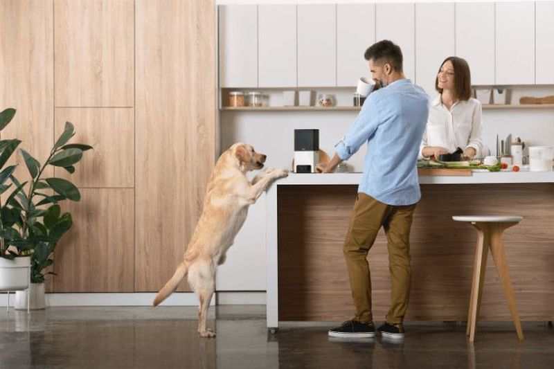 Petcube Bites 2 and Petcube Play 2 Interactive Pet Cameras with Built-in Alexa