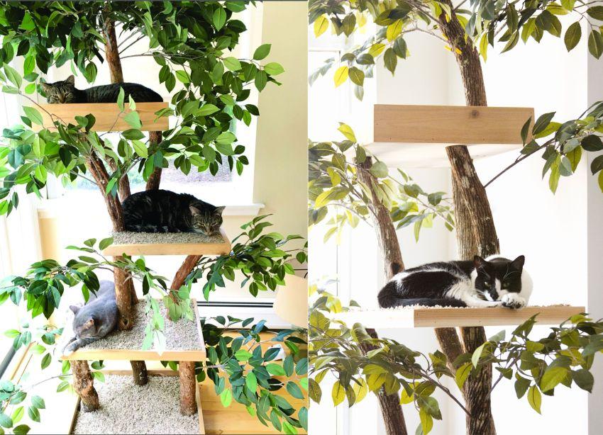 Ready-to-Assemble Real Wood DIY Cat Tree Kits
