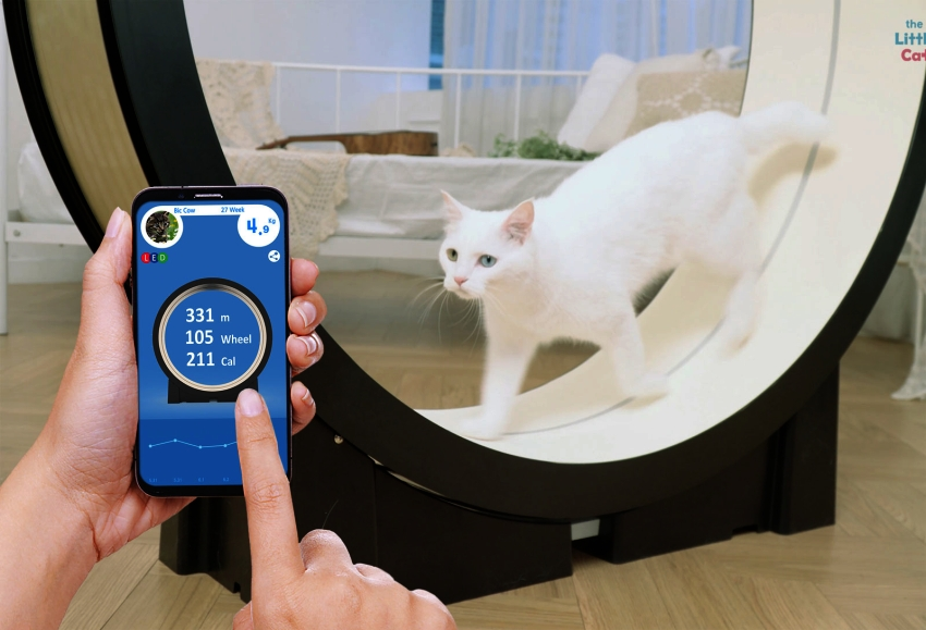 The Little Cat Treadmill - CES 2019