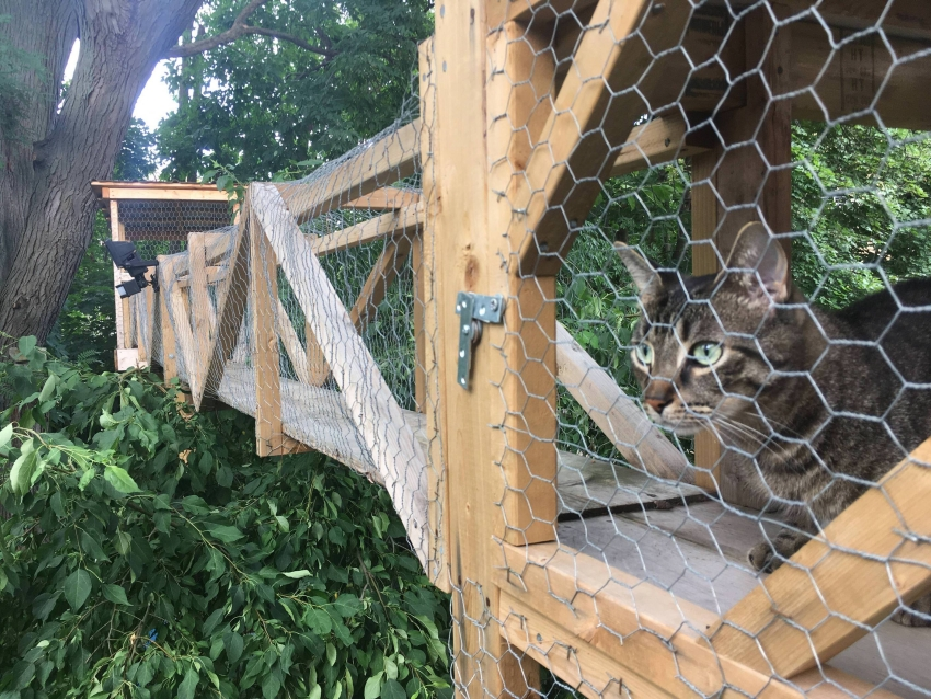 Pet Lover Builds Sprawling Outdoor Cat Tree House In His