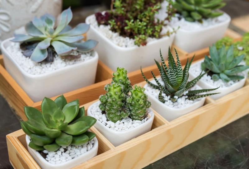 Indoor succulent plants - Vertical Gardening