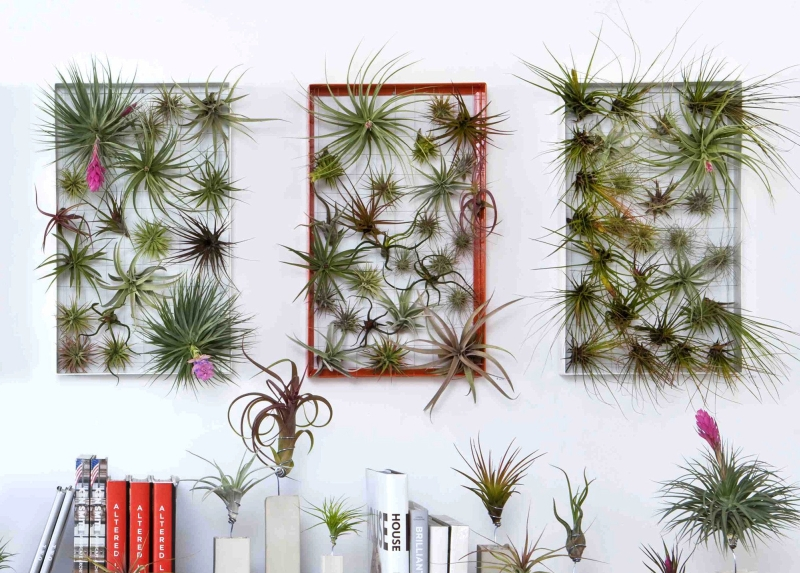 Living Wall Art by Josh Rosen