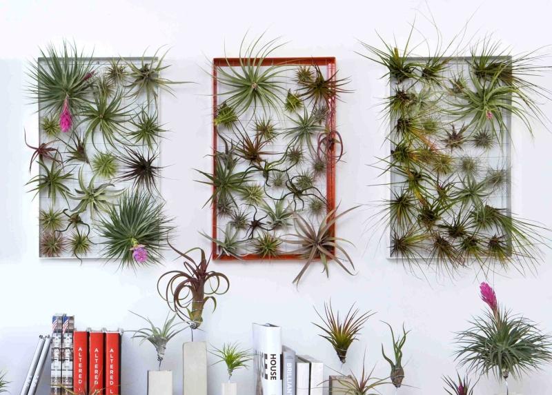 Living Wall Art by Josh Rosen