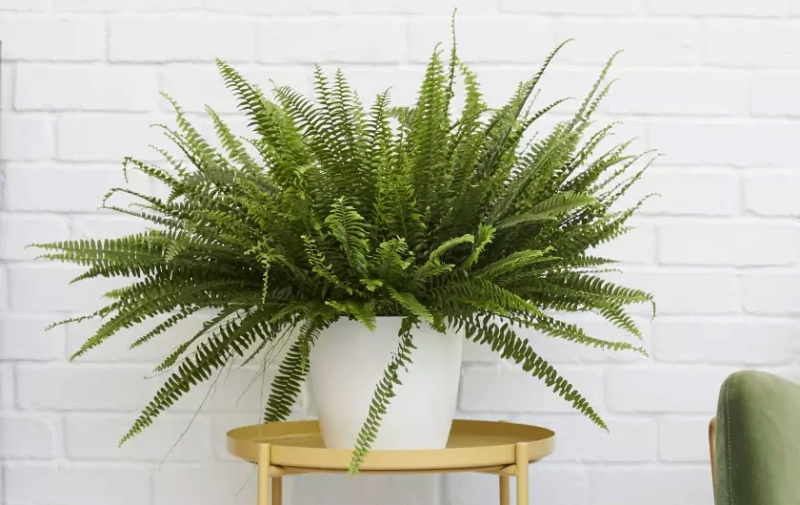 Sword Fern - Vertical Garden Planter