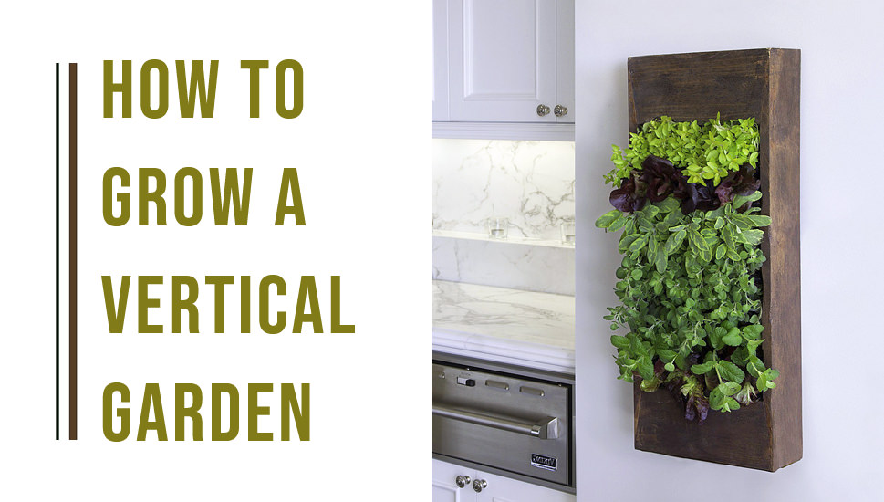 how to grow indoor vertical garden