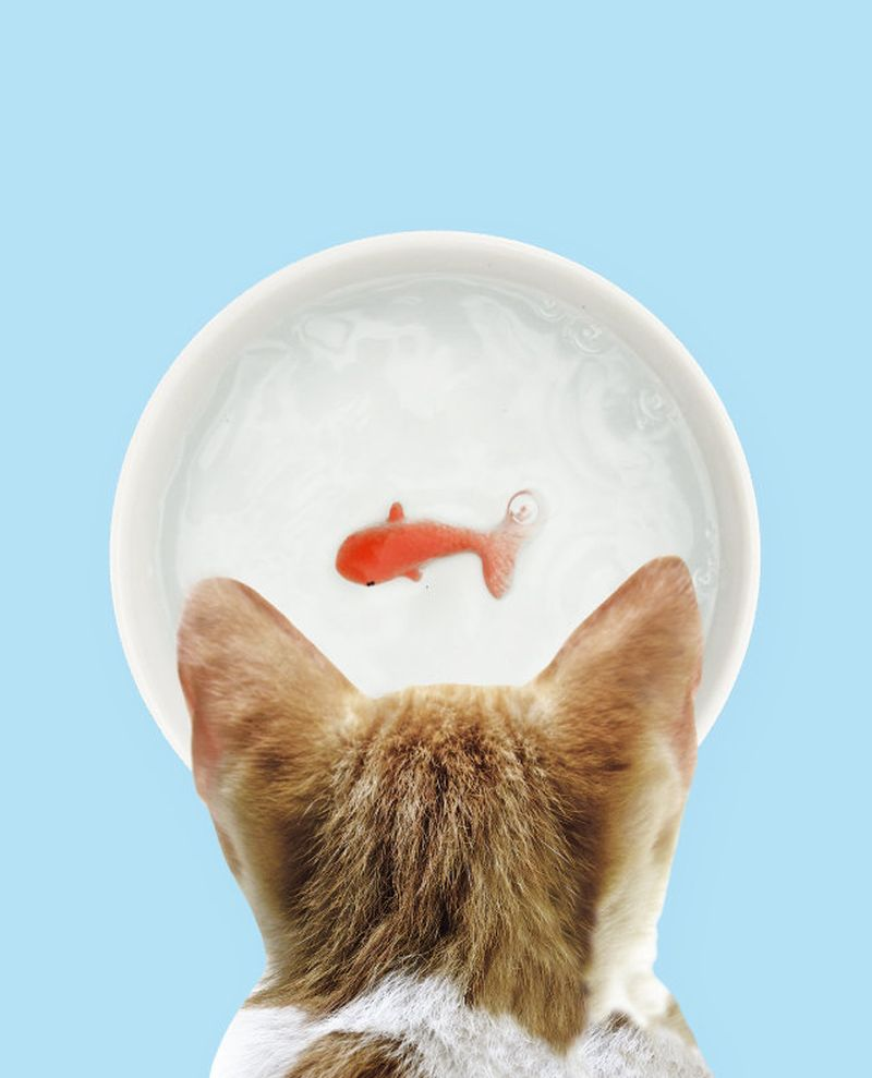 Goldfish Pet Bowl by Suck UK will Fool Your Cats