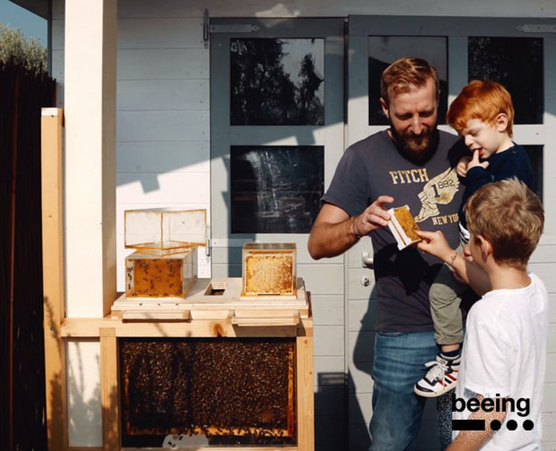 B Box Hive By Beeing Is Designed For Beekeeping In Small