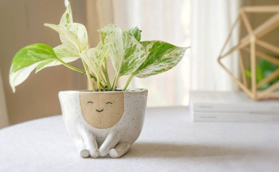 Handcrafted-Ceramic-Planter-by-Abby-Ozaltug-3
