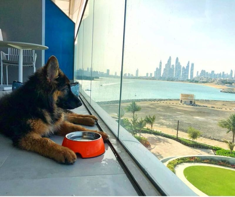 You can Take Your Puppy to this Pet-Friendly Luxury Hotel in Dubai