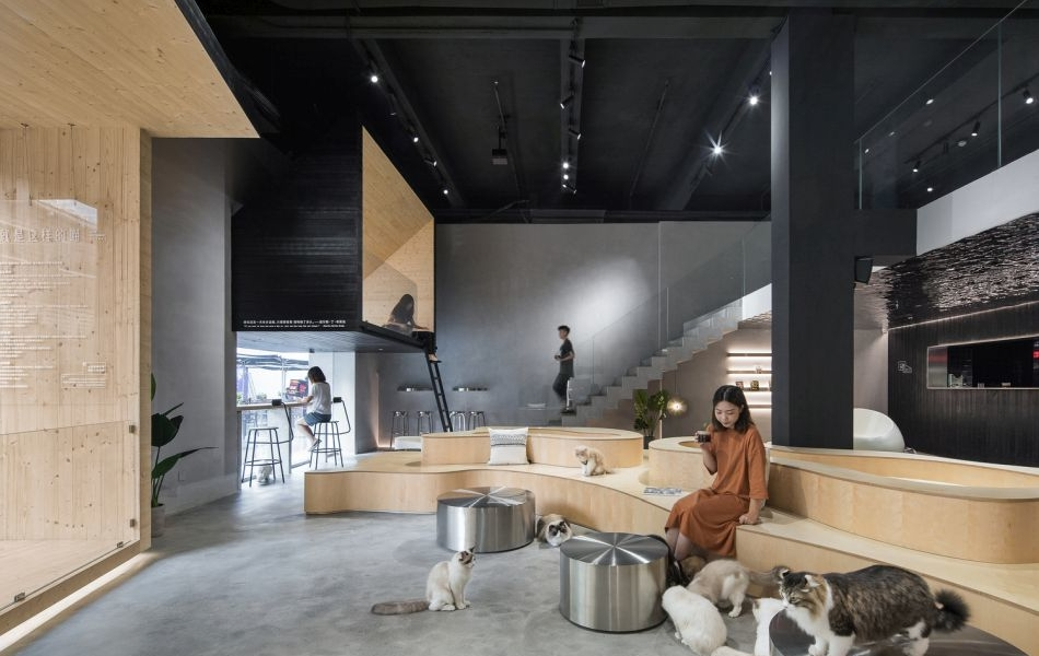 Cat Café in China Shares Space for Humans and Cats Alike