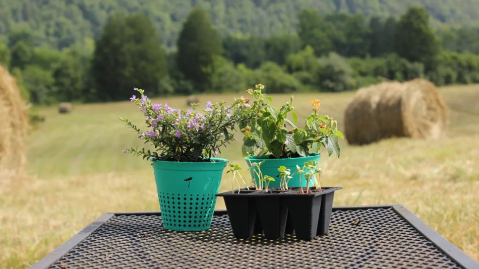 Biodegradable plastic pot can be planted along with theflora