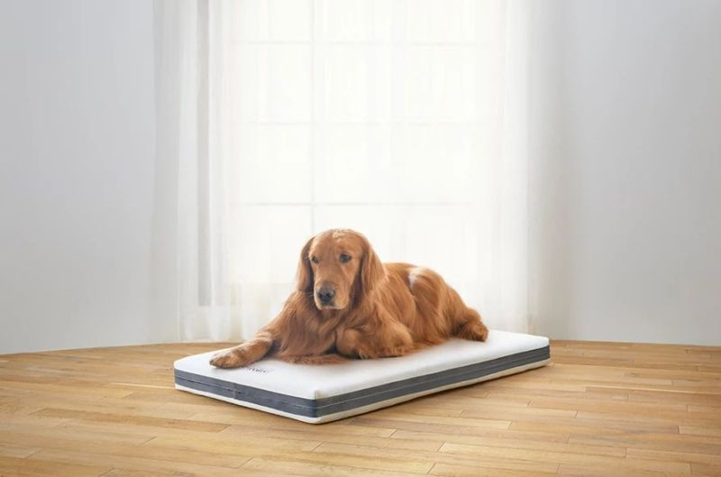 Airweave Dog Bed is Made from the Same Material its Mattresses Are