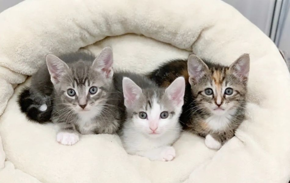 You can Stay at Kitten Bnb with Kitties and Also Adopt one