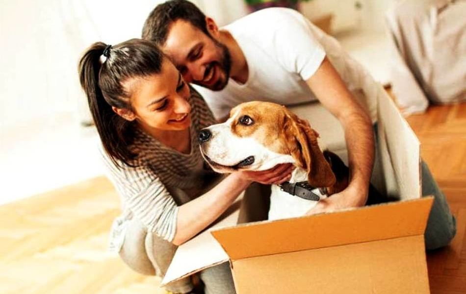Tips to moving with pets