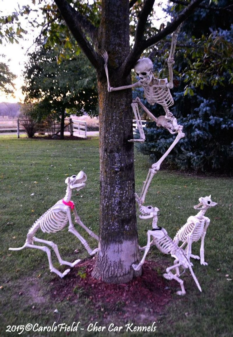 Crazy skeleton running ways from dogs