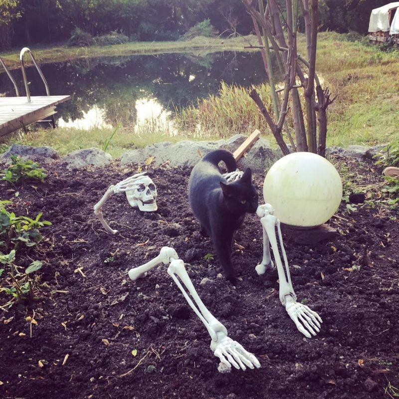 Skeleton in the grave