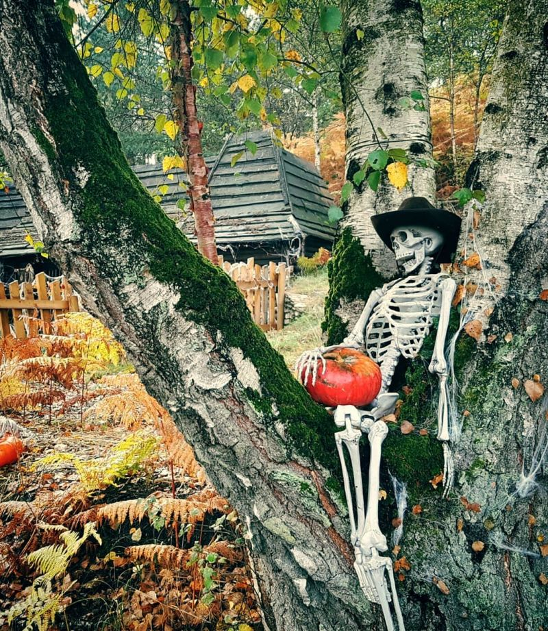 Skeleton pirate looking over from a tree