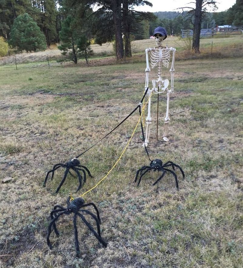 Skeleton taking spiders on a walk