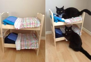 DIYer Transforms DUKTIG Doll Beds into Cat Bunk Bed