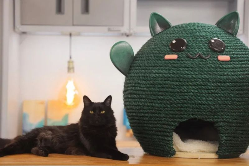 DIY Cat House from Balloons by Evan and Katelyn