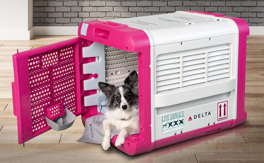 Delta to Launch CarePod Pet Carrier that Improve Air Travel Experience for Pets