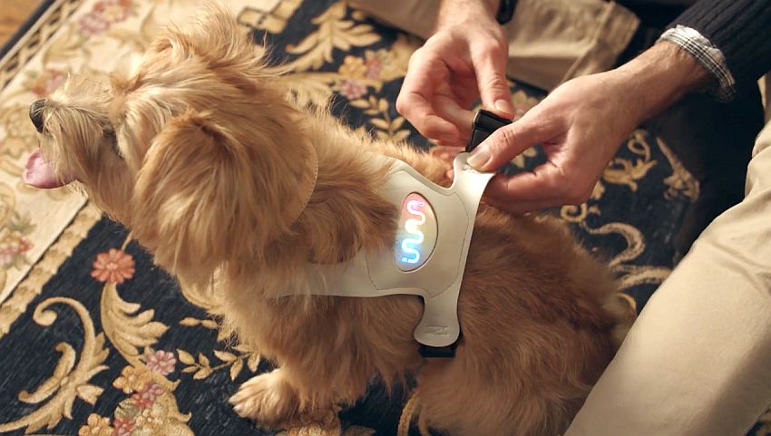 Inupathy dog emotion wearable device