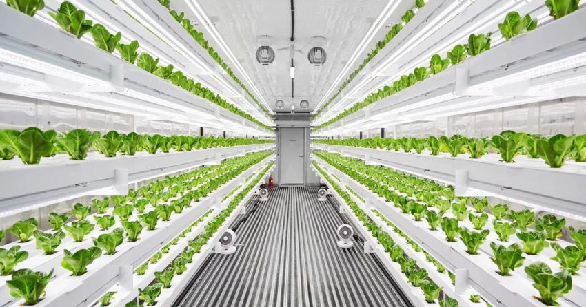 Planty-cube-automated-vertical-farming-system