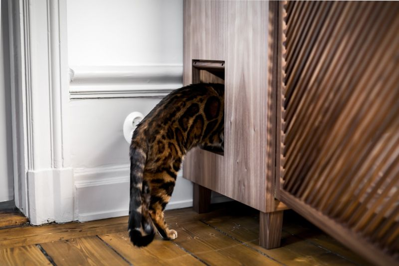 This Cat Flat by 24Storage is Ideal for You and Your Cat