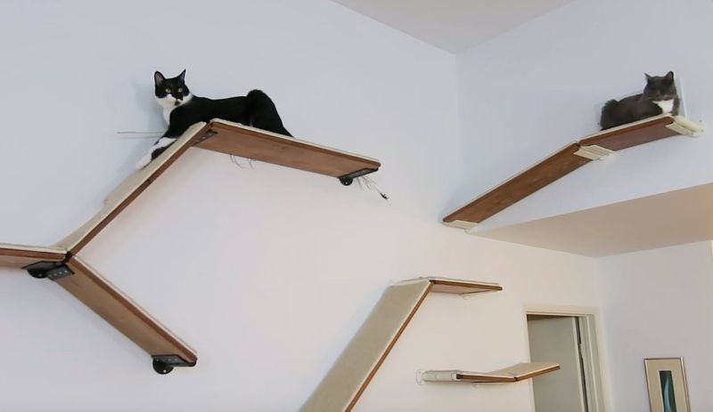 CatScapes Cat Shelves with Infinite Design Possibilities for Your Cat to Enjoy