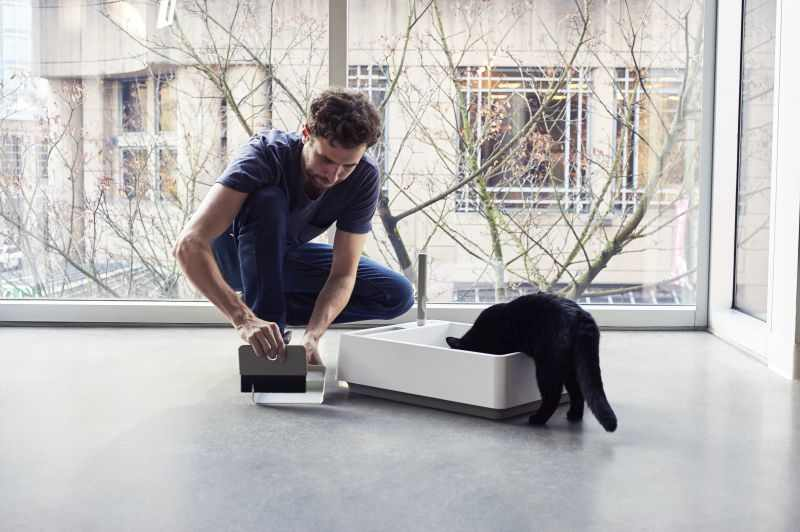 Things to consider before getting a cat home